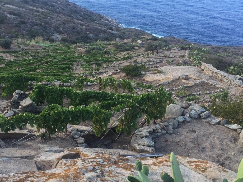 bibi graetz grande vino piccola isola del giglio giglionews